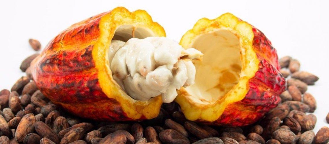 cacau-para-plantio-ou-consumo-100-natural-fruta-promoc-D_NQ_NP_471815-MLB25318575421_012017-F-1024x564